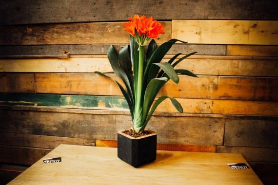Vases en chêne